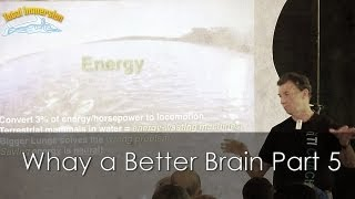 Swimming Faster Presentation Part 5 - Why a Better Brain is the Solution