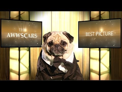 THE AWWSCARS! Best Picture Nominees! Adorable Pug Version!