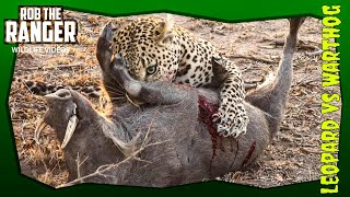Video Leopard Vs Warthog: African Wildlife In Action! MP3, 3GP, MP4, WEBM, AVI, FLV Desember 2018