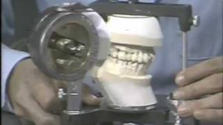Basic Articulator Movements