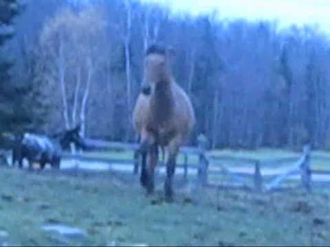 comment nettoyer le paddock dans my horse