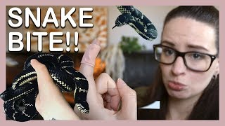 SNAKE BITE!? (What does it feel like? How to treat) by Jossers Jungle