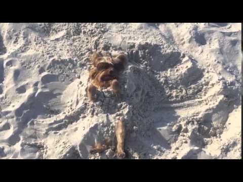 Beach Dog Buried in the Sand