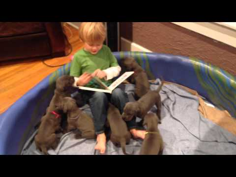 Rheece Reads to the Puppies