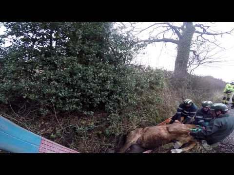 Horse winched to safety after getting trapped in ditch out hacking [VIDEO]
