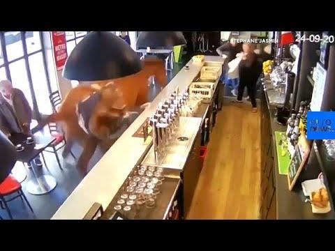 Γαλλία: Άλογο μπούκαρε σε…μπαρ!