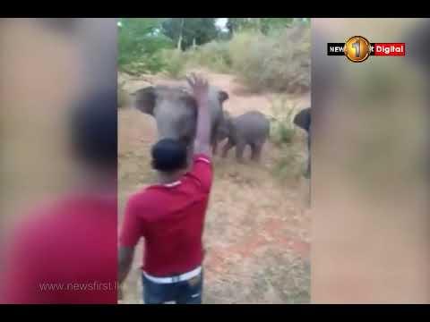 Wild elephant kills person due to provocation