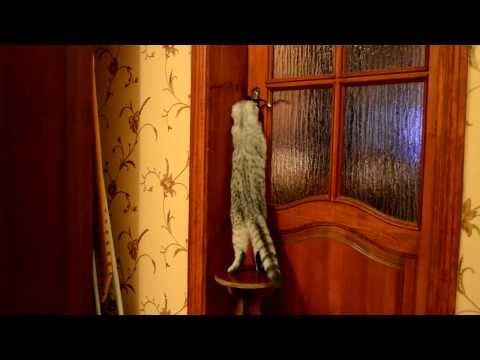 Кошка открывает двери