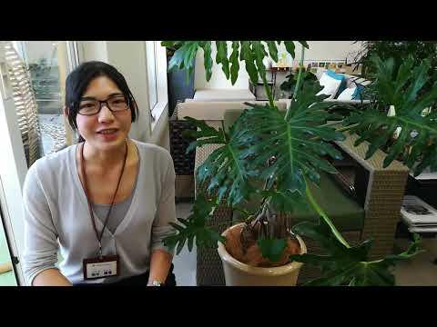 出雲市 外構 エクステリア 庭 リビングガーデン 観葉植物 フィロデンドロン・セローム