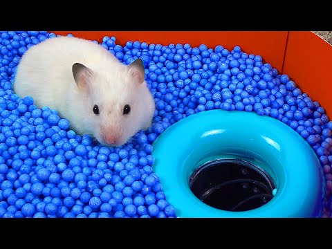 🐹 WORLD'S LARGEST HAMSTER MAZE -Obstacle course!