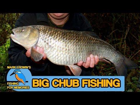 BIG CHUB  Fishing on a Thames tributary (video 30) (видео)