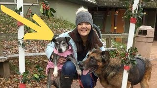 Nurse Comes Up With A Genius Solution For Old Abandoned Dogs That's Spreading Like Wildfire by Did You Know Animals?