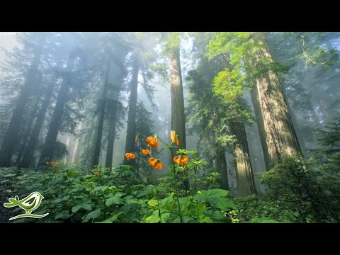 Beautiful Relaxing Music • Peaceful Piano Music & Guitar Music | Sunny Mornings by Peder B. Helland