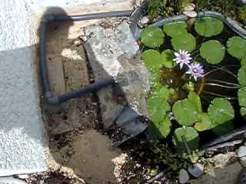 Plastico pvc para estanques videos videos relacionados for Filtro para estanque de tortugas