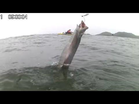 Pescaria de Espadas na Praia da Armação - Penha SC.