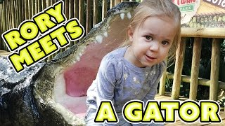 🐊MASSIVE ALLIGATOR FEEDING 🐊 WHO GETS EATIN? 🐊FAMILY VLOG
