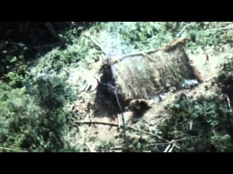 yasuni - http://polificcion.wordpress.com/2013/08/16/motivos-para-no-explotar-el-itt/ Documental de los grupos no contactados, su problemática, la verdad del Yasuní, ...