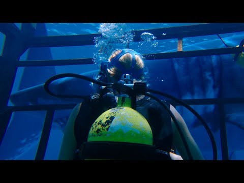 47 METRES DOWN TRAILER -  MANDY MOORE, CLAIRE HOLT, SHARKS!!!