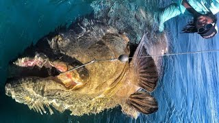 Video MONSTER GOLIATH GROUPERS 500 POUND WITH CAPT. BEN CHANCEY (CHEW ON THIS) - HD by CATFISH WORLD MP3, 3GP, MP4, WEBM, AVI, FLV Oktober 2018
