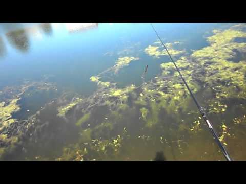 7-25-2011 Tim's Pond Bass Fishing. Craw Tubes And Power Worms.