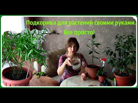 Растения своими руками дети