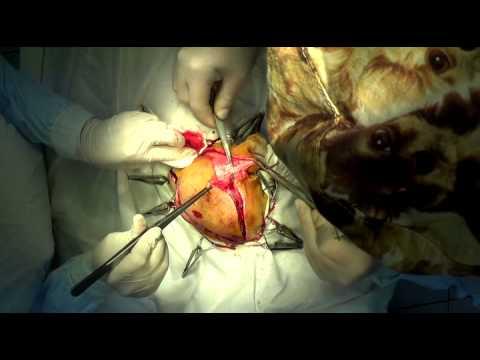 Удаление фибросаркомы головы у собаки