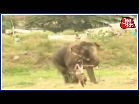 Video Berserk elephant Causes Panic In Pune download in MP3, 3GP, MP4, WEBM, AVI, FLV January 2017