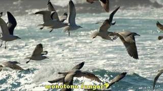 Os Pinos (Escrito: 1890/Estrenado: 1907) Música: Pascual Veiga Letra: Eduardo Pondal ¿Qué dicen los rumorosos en la costa...