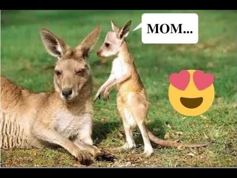 Baby Kangaroo Always Sleeps In The Mother's Pouch