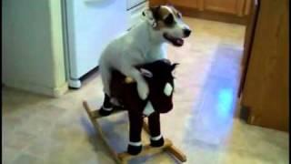 Este Perro Hace De Todo! Simplemente Genial!