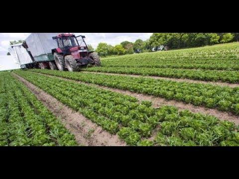 LANDWIRTSCHAFT: Kaum Regen, kaum Ernte – Landwirte schl ...