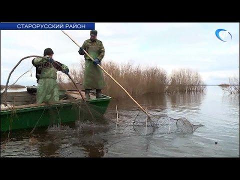 На Ильмене началась весенняя путина – лов рыбы традиционными сетями-ловушками