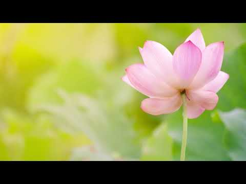 Meditation Music For Anxiety: Enhance Positive Energy, Reduce Stress, Deep Tranquil Healing Music