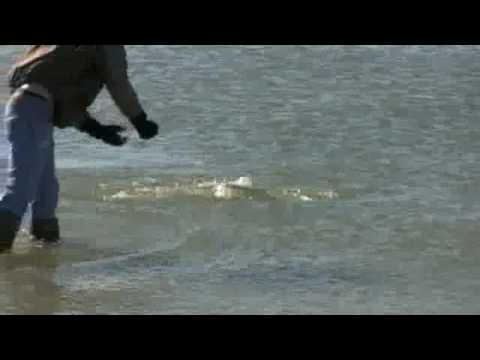 Texas Black Drum Fishing – Jan 2009