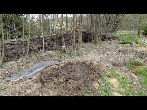 Если близко грунтовые воды как сажать сад 99