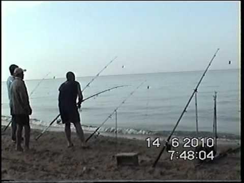 снасть для ловли пеленгаса на кубани