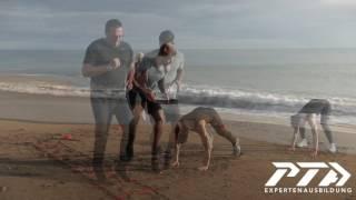 Trailer Personal Trainer Ausbildungen