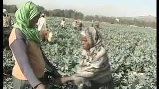 Ethiopian Horticulture Development Documentary Film- English.avi