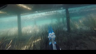 Forster Australia  city photo : Spearfishing Forster Oyster racks with the Rob Allen 1200 Carbon gun Nelson Bay Australia