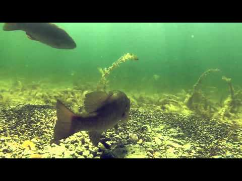Smallmouth Bass – Ritual of the Spawn