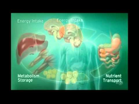 il sistema endocannabinoide!