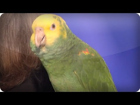 Echo the talking bird from Animal Gardens - America's Got Talent