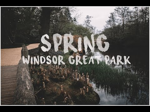 SPRING|| Windsor Great Park || Savill Garden || Sony A6500 || Sigma 30mm 1.4 || Zhiyun Crane Plus