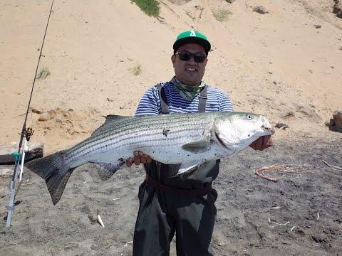 20 lb Striped Bass – Surf Fishing Northern CA