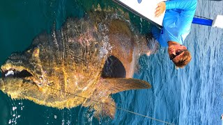 Young Boy Fishing for Giant Fish Biggest Of His Life Off East Coast Florida! Chew On This LivestreamUnbelievable livestream with a giant fish. Huge Goliath grouper caught by young boy on Chew On This.Be sure to check outhttp://www.youtube.com/realsaltlifefor more great videosHot UpdateDIY Homemade Clothes Hanger BOWFISHING REEL!https://www.youtube.com/watch?v=zmwdkdnr1BMcheckoutThe most RANDOM Pond Bass Fishing video you will EVER watch..https://www.youtube.com/watch?v=O-mREAj5d10▬▬▬▬▬▬▬ About Chew On This ▬▬▬▬▬▬▬Chew On This provides the viewer a first hand look at catching mean aggressive high intensity fish fishing videos on the web. Captain Ben Chancey does fishing at its pinnacle and highest level of difficulty. Captain Ben has caught giant fish on just about everything including paddleboards, Kayaks, floats tubes, ultra skiffs, bay boats, flats boats, sportfishers and even gheenoes. Chew On This videos and content have been featured on Discovery, National Geographic, Today Show, Good Morning America, Fox News, ESPN, Fox Sports, The Weather Channel and many more! ► NEW VIDEO EVERY WEDNESDAY► Click Here to Subscribe → http://bit.ly/1tQiHaf► Find out More about boat → http://ultraskiff.com► Website → http://chewonthis.tv• Instagram → http://instagram.com/captchancey• Twitter → http://twitter.com/#!/captchancey• Email → captchancey@gmail.com• Snapchat → chewonthisfish Ben Chancey▬▬▬▬▬▬▬ PROMOTIONS ▬▬▬▬▬▬▬Remote Battery Boosterhttp://www.safetyboost.com#safetyboost.com#chewonthis#saltlifeClick Here to Subscribe! ► http://bit.ly/1tQiHaf▬▬▬▬▬▬▬ BRANDS WE USE ▬▬▬▬▬▬▬• HUMMINBIRD• Salt Life• Minn Kota• Diawa• Safety Boost Remote Battery Booster▬▬▬▬▬▬▬ RELATED VIDEOS ▬▬▬▬▬▬▬Tiny Creek Fishing after a Flood? (Surprise Catch!)https://www.youtube.com/watch?v=eFw250sA1uI&t=9sBest Fishing Lure for Bass and Snakeheads! DOOMSDAY TURTLE LURE?!https://www.youtube.com/watch?v=Yqn-RypJsHY&t=19sNEW PET MONSTER FISH in my HOME POOL POND! Help me Name Him?https://www.youtube.com/watc