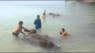Elephant Thalassotherapy Koh Chang Thailand