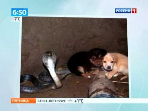這兩隻小狗狗掉進一口「有眼鏡蛇在裡面」的井,接著發生的事大家都覺得太驚奇了!
