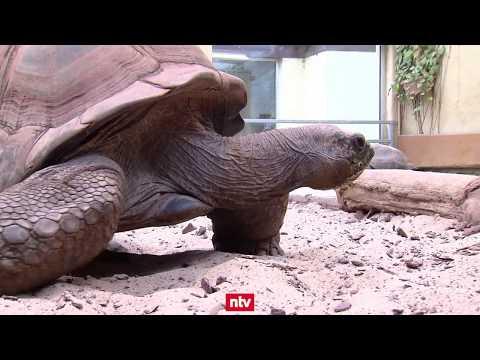 Darmstadt: Ein smarter Zoo im Zeitalter der Digitalisie ...