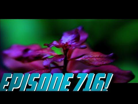 Episode 716! Ludwigia Paulstris in the Shrimp Aquascape._Akvárium