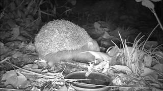 Wildlife Trail Camera - 25.10.2016